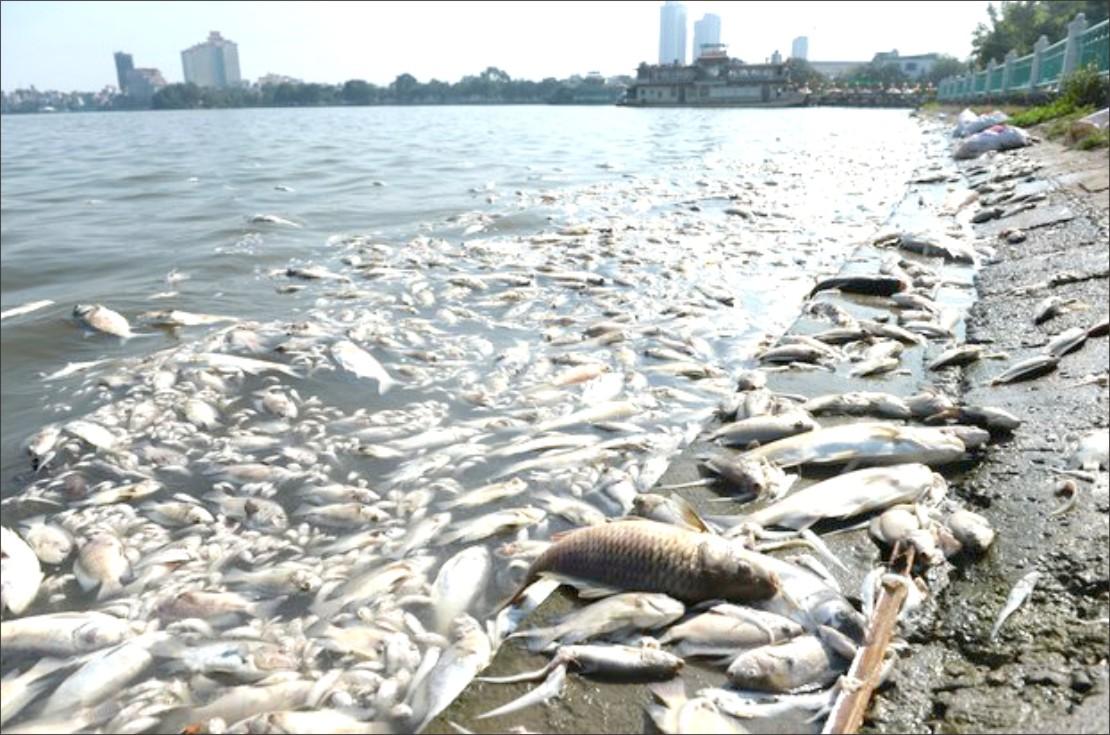 (Reuters) - Chất lượng không khí ở Việt Nam nói chung chưa thể qua mặt Trung Quốc hay Ấn Độ về mức độ ô nhiễm. Tuy nhiên nạn ô nhiễm ở Việt ...
